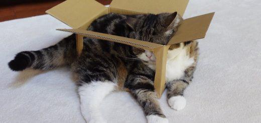 箱猫の夏の装い涼しげに、最後は猫が流体と化す