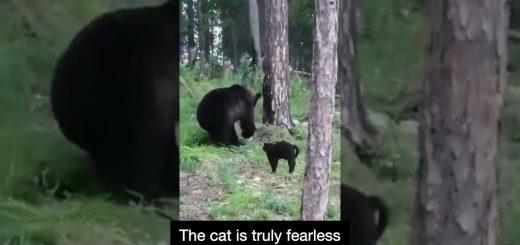 キャンプ中ヒグマに遭遇、黒猫の激しい威嚇で熊は退散