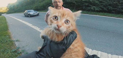 ライダーの動体視力の高さのおかげで、路上の子猫の命が助かる