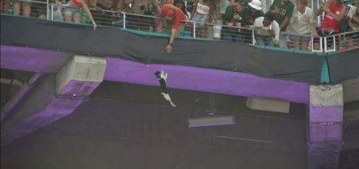 スタジアム2階席から落下した猫、無事救出され観客総立ち