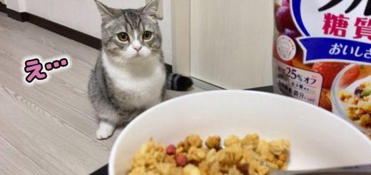 カリカリと同じ音色のグラノーラ、食らう飼い主猫はドン引き