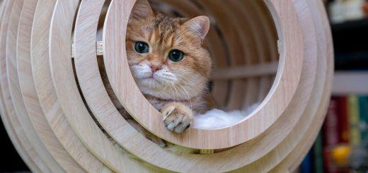 日本ではアレにしか見えぬ猫ベッド、知らずに猫は優雅に寝転ぶ